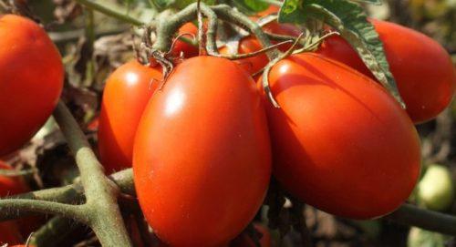 Passata di pomodoro italiano rustica con  basilico fresco 500g -naturale- no additivi